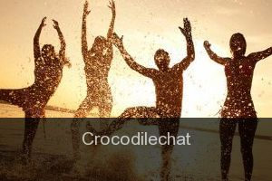Crocodilechat